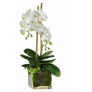 A White Orchid Plant in a Stylish Glass Container